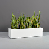Montserrat Rectangular Planter with plants