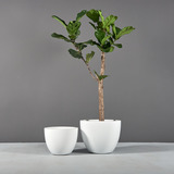 Salzburg Tapered Round Planters with plants
