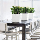 Cube Planters on Dining Table Inside