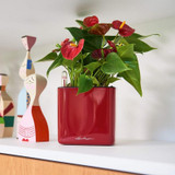 Cube Glossy Planter with Houseplants
