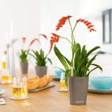 Deltini Round Tabletop Planters