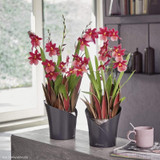 Orchidea Round Planter Indoors With Plants Flowering
