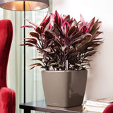 Quadro LS Square Planter on Side Table