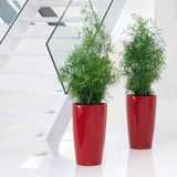 Rondo Tall Round Planter By the Staircase