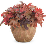 Fun and Games Red Rover Foamy Bells with Red Foliage in Container
