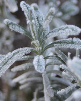 How To Tell If Your Plants Survived The Texas Winter Storm