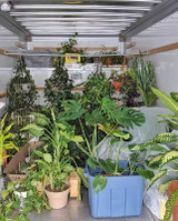 Moving Long Distances with Plants