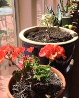 Gardening Tasks For Late Fall