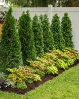 Top 9 Space Saving Hedges