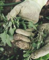 Summer Gardening Tasks