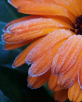 Gardening Tasks For Early Winter