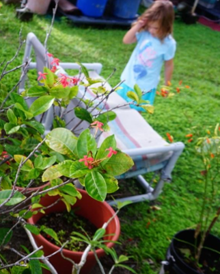 Growing a Kid's Garden with 5-10 Year Olds