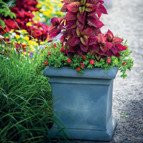 Dorchester Square Planter With Plants