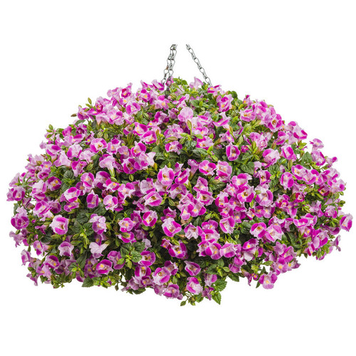 Catalina Pink Wishbone Flower in Hanging Basket