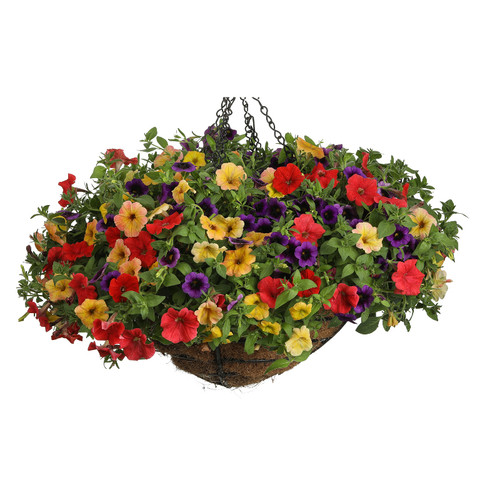 Beach Blanket Bingo in Mixed Annual Combo Hanging Basket