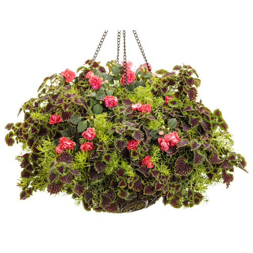 East Coast Swing Mixed Annual Combination in Hanging Basket