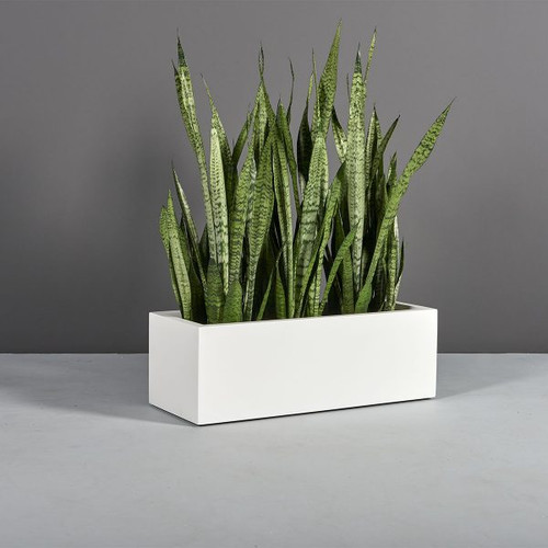 Kiel Low Rectangle Planter with plants