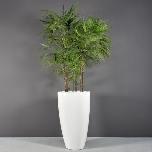 Peypin Tall Extra Large Round Planter with plants