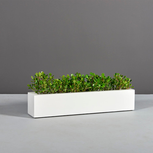 Salon Narrow Low Rectangular Planter with plants