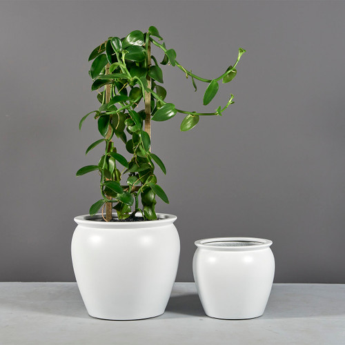 Shanghai Fishbowl Planters with plants