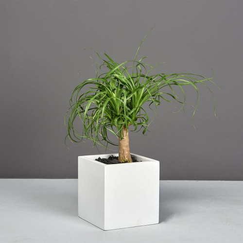 Tonto Small Cube Planter with plants
