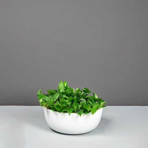 Vienna Focus Bowl Planter with plants