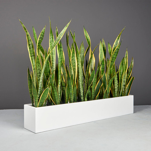 Wheeling Narrow Rectangular Planter with plants