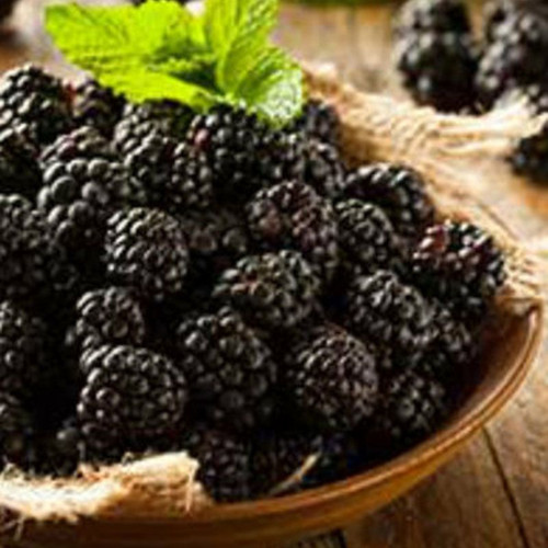 Navaho Blackberries in Bowl Cropped