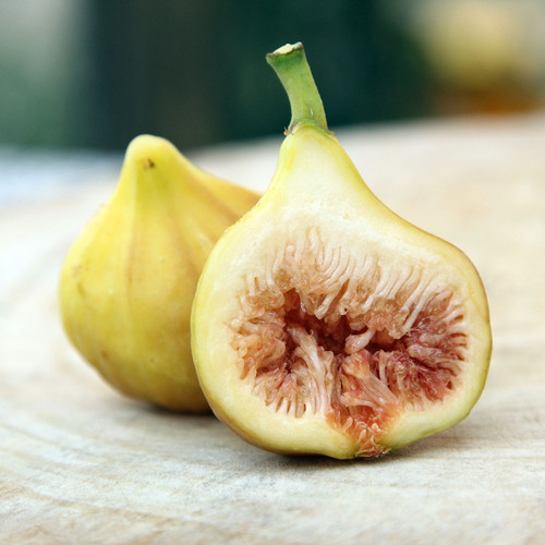 LSU Gold Fig Tree Fruit