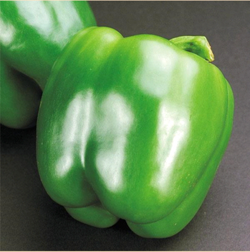 Green California Wonder Pepper