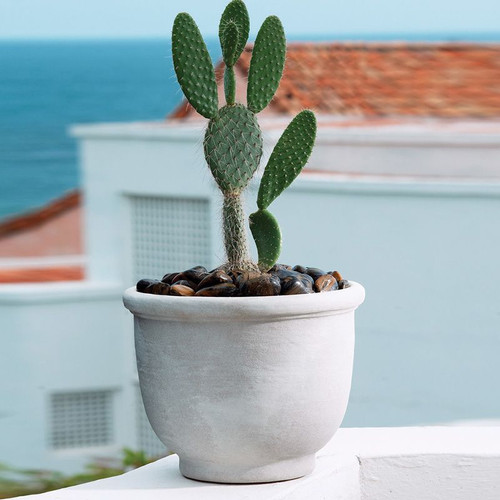 Agave Planter Outside