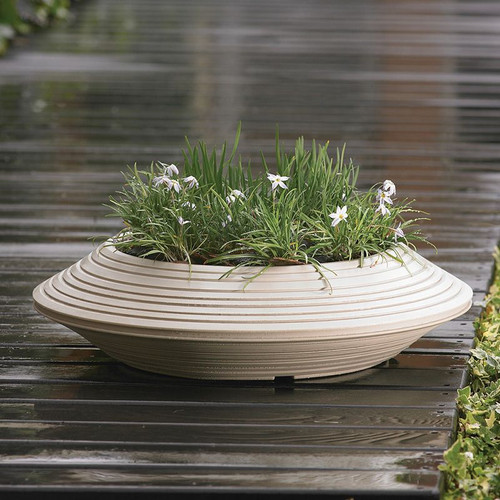 Daniel Bowl Planter with plants