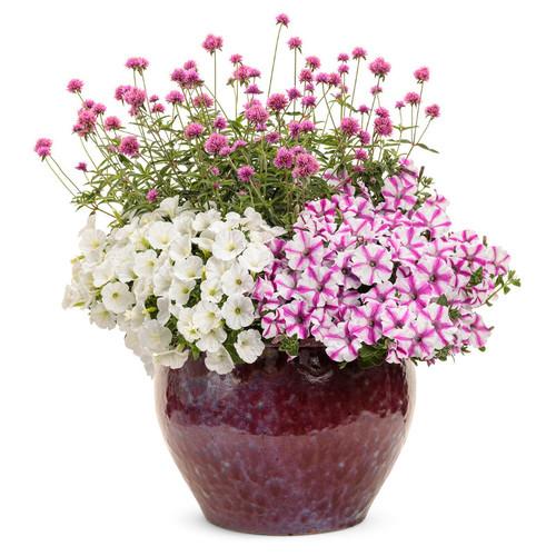 Eternal Love Mixed Annual Combination in Garden Planter