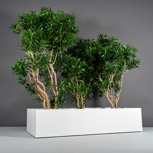 Selenge Extra Wide Large Rectangle Planter with plants