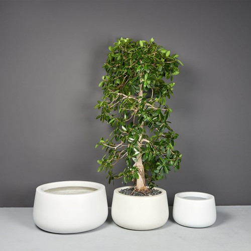 Short Hayden Tapered Round Planters with plants