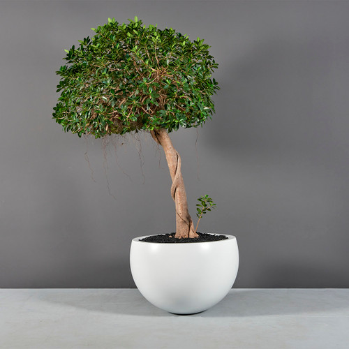 Tarragona Bowl Planter with plants