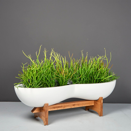 Timbrell Modern Planter with plants
