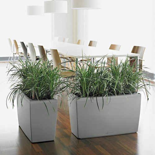 Cararo Rectangular Planter By the Dining Table