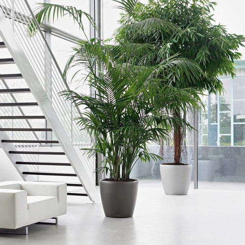 Classico Round Planters Next To The Stairs