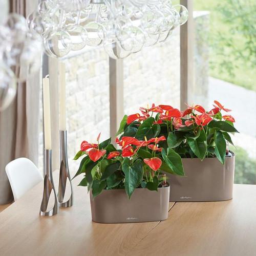 Delta Rectangular Planter on Patio Table