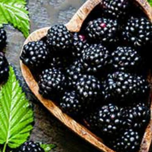 Prime Ark Freedom Blackberries in Bowl Cropped