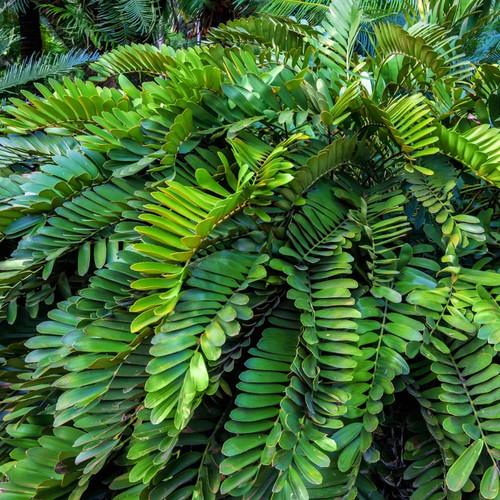 Large cardboard palm house plant