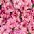 Superbells® Double Orchid Calibrachoa flower blooms