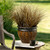 Graceful Grasses® Toffee Twist Sedge Grass in Tabletop Planter