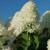 Quick Fire Fab® Hydrangea flower