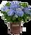 Big Daddy Hydrangea in Branded Pot