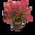 Obsession Nandina in Branded Pot