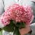 Fresh Cut Invincibelle Ruby Hydrangea Flowers in Bouquet