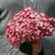 Large Invincibelle Ruby Hydrangea Flower
