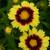 Uptick Yellow